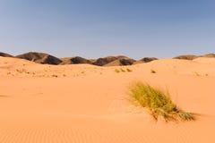 Αμμόλοφοι άμμου Ouzina, Μαρόκο Στοκ Εικόνες