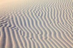 Αμμόλοφοι ερήμων άμμου Στοκ Εικόνα