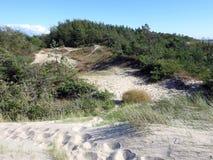 Αμμόλοφοι κοντά στη θάλασσα της Βαλτικής, Λιθουανία Στοκ Φωτογραφίες
