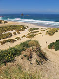 Αμμόλοφοι παραλιών και άμμου Στοκ εικόνες με δικαίωμα ελεύθερης χρήσης