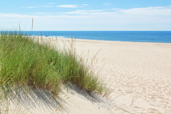 Αμμόλοφοι σε μια ηλιόλουστη παραλία κοντά στην παραλία. Στοκ φωτογραφία με δικαίωμα ελεύθερης χρήσης