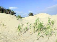 Αμμόλοφοι σε Nizzanim, Ισραήλ Στοκ φωτογραφία με δικαίωμα ελεύθερης χρήσης