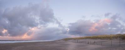 Αμμόλοφοι στην ολλανδική ακτή στο πανόραμα Στοκ Εικόνες