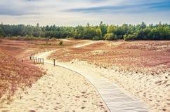 Αμμόλοφοι στη Λιθουανία Στοκ Εικόνες