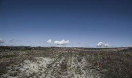 Αμμόλοφοι της Nida Στοκ Εικόνες