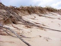αμμόλοφοι Στοκ Φωτογραφίες