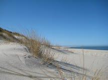 αμμόλοφοι Στοκ εικόνα με δικαίωμα ελεύθερης χρήσης