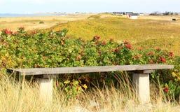 Αμμόλοφοι Falsterbo κοντά σε Nabben, Σουηδία Στοκ εικόνες με δικαίωμα ελεύθερης χρήσης
