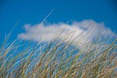 Ένας αμμόλοφος άμμου Στοκ Φωτογραφία