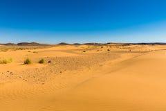 Αμμόλοφος άμμου με τη χλόη Στοκ Φωτογραφία