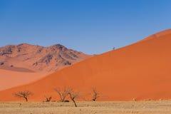 Αμμόλοφος άμμου με το νεκρό deadvlei Ναμίμπια δέντρων Στοκ Εικόνες