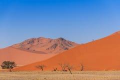 Αμμόλοφος άμμου με το νεκρό deadvlei Ναμίμπια δέντρων Στοκ Φωτογραφία