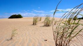 Αμμόλοφος άμμου, ουρανός και χλόες Στοκ φωτογραφίες με δικαίωμα ελεύθερης χρήσης