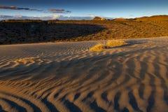 Αμμόλοφος άμμου στην έρημο της Νεβάδας στοκ φωτογραφίες