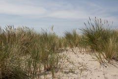 Αμμόλοφος άμμου της θάλασσας της Βαλτικής με τις εγκαταστάσεις Στοκ φωτογραφία με δικαίωμα ελεύθερης χρήσης