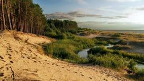 Αμμόλοφος δασών και άμμου Στοκ φωτογραφία με δικαίωμα ελεύθερης χρήσης