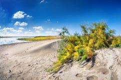 Αμμόλοφος κοντά στη λίμνη Στοκ εικόνες με δικαίωμα ελεύθερης χρήσης