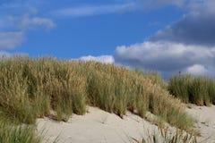 Αμμόλοφος στη θάλασσα της Βαλτικής Στοκ φωτογραφία με δικαίωμα ελεύθερης χρήσης