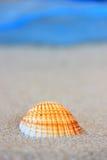 αμμώδες θαλασσινό κοχύλι παραλιών Στοκ Φωτογραφίες
