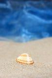 αμμώδες θαλασσινό κοχύλι παραλιών Στοκ φωτογραφία με δικαίωμα ελεύθερης χρήσης