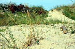 Αμμώδης ακτή του οβελού Curonian στη Ρωσία Στοκ Εικόνα