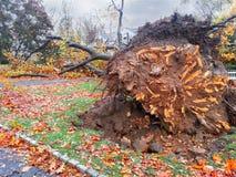 2012 αμμώδης ερήμωση τυφώνα στο Νιου Τζέρσεϋ στοκ εικόνα με δικαίωμα ελεύθερης χρήσης