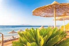 Αμμώδης καρέκλα παραλιών με τις ομπρέλες αχύρου και τη γραμμή του ορίζοντα στοκ εικόνες με δικαίωμα ελεύθερης χρήσης
