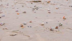 Αμμώδης παραλία με τα rapan κοχύλια και ένα κοχύλι conch απόθεμα βίντεο