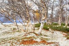 Αμμώδης παραλία στη λίμνη Gjevillvatnet, Νορβηγία στοκ εικόνες