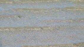 Αμμώδης όχθη της λίμνης κίνηση αργή φιλμ μικρού μήκους