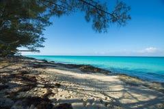 Αμμώδης παραλία σε Bimini που πλαισιώνεται με τα δέντρα στοκ εικόνες