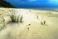 Αμμώδης παραλία στη θάλασσα της Βαλτικής με την ανάπτυξη ryegrass άμμου, arenarius Leymus Δραματικός θυελλώδης θυελλώδης ουρανός Στοκ Φωτογραφίες