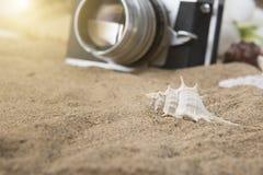 αμμώδη κοχύλια θάλασσας παραλιών Καλοκαίρι Στοκ Φωτογραφία