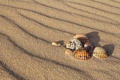αμμώδη κοχύλια θάλασσας παραλιών Στοκ φωτογραφία με δικαίωμα ελεύθερης χρήσης