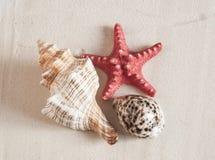 αμμώδη κοχύλια θάλασσας παραλιών Στοκ εικόνες με δικαίωμα ελεύθερης χρήσης