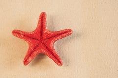 αμμώδη κοχύλια θάλασσας παραλιών Στοκ Εικόνα
