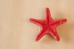 αμμώδη κοχύλια θάλασσας παραλιών Στοκ εικόνα με δικαίωμα ελεύθερης χρήσης