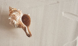 αμμώδη κοχύλια θάλασσας παραλιών Στοκ Φωτογραφία