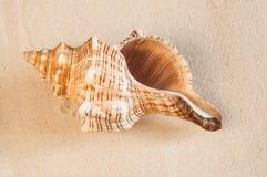 αμμώδη κοχύλια θάλασσας παραλιών Στοκ Εικόνες