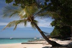 Αμμώδη παραλία και Palma στο νησί των Μαλδίβες Στοκ Εικόνες
