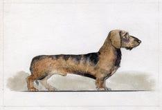 Αμοιβή που χρωματίζεται νάνα στο watercolor στο σχεδιάγραμμα στοκ φωτογραφία με δικαίωμα ελεύθερης χρήσης