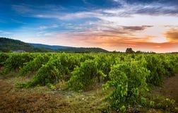 Αμπελώνας και τοπίο ηλιοβασιλέματος - γεωργία Στοκ φωτογραφία με δικαίωμα ελεύθερης χρήσης