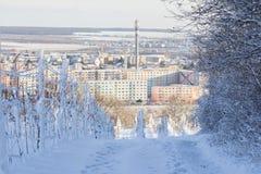 Αμπελώνας που καλύπτεται με το χιόνι επάνω από Pezinok Σλοβακία Στοκ φωτογραφία με δικαίωμα ελεύθερης χρήσης