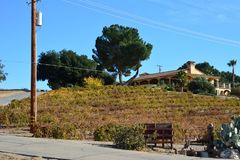 Αμπελώνας πτώσης Robles Paso με το δρύινο δέντρο και τα καταπληκτικά χρώματα φθινοπώρου Στοκ Φωτογραφία