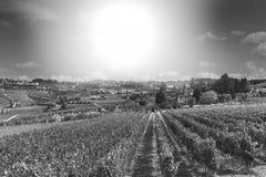 Αμπελώνας στην Ιταλία στην ανατολή Στοκ φωτογραφίες με δικαίωμα ελεύθερης χρήσης