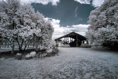 Αμπελώνας στην Πολωνία στοκ εικόνα με δικαίωμα ελεύθερης χρήσης