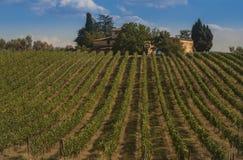 Αμπελώνας στους λόφους Chianti στοκ φωτογραφία με δικαίωμα ελεύθερης χρήσης