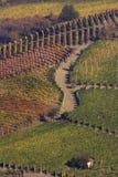 αμπελώνας τοπίων φθινοπώρ&omic Στοκ Εικόνα
