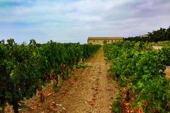 Αμπελώνας Domaine de Maguelone κοντά στο Μονπελιέ, νότια Γαλλία, Στοκ εικόνα με δικαίωμα ελεύθερης χρήσης