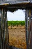 Αμπελώνας Domaine de Maguelone κοντά στο Μονπελιέ, νότια Γαλλία, Στοκ Φωτογραφίες